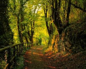 Как сделать красивую фотографию леса
