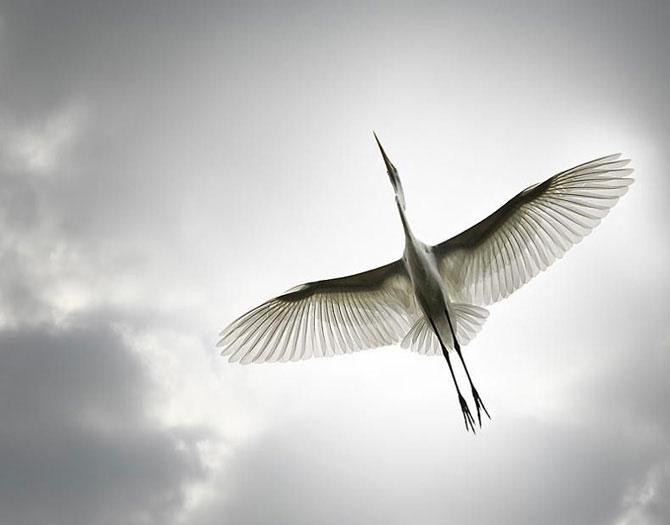Как фотографировать птиц правильно