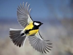 Фотосъемка птиц в полете