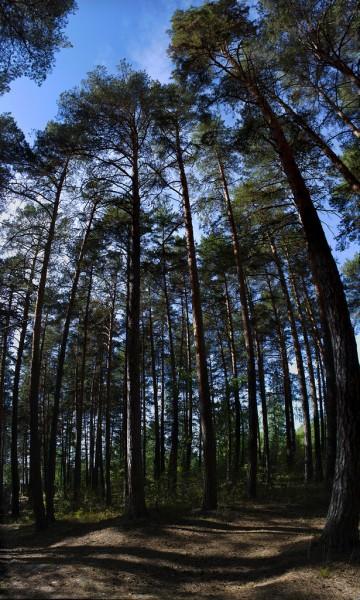 Вертикальная панорама в восемь кадров