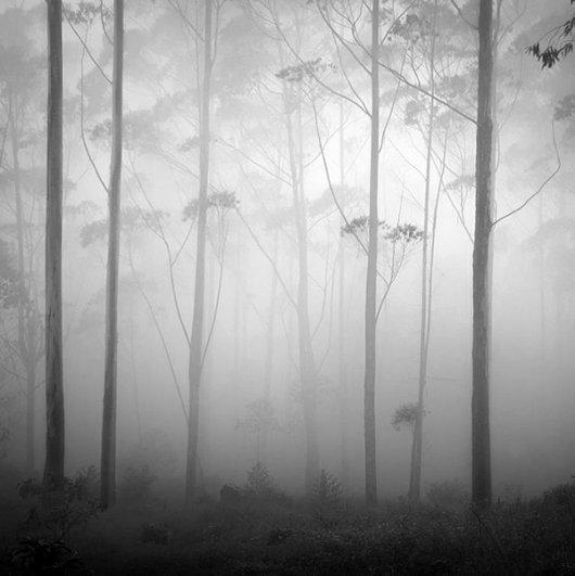 Туман создает ореол таинственности