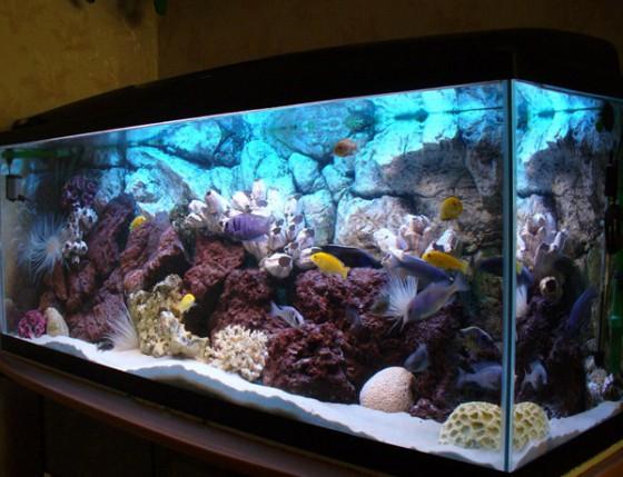 Подготовьте аквариум к съемке