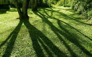 Как красиво фотографировать тень?