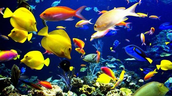 """Фотосъемка рыбок в режиме """"Спорт"""""""