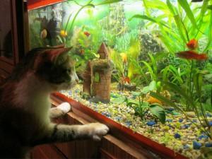 Фотосъемка аквариумных рыбок