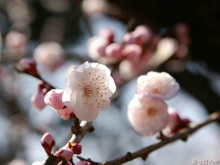Несколько правил фотосъемки цветов