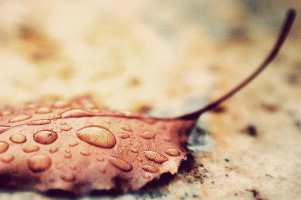 Фотографируем в дождь